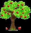 Pomi fructiferi Botosani